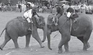 King's Cup Elephant Polo Tournament Celebrates its 10th Anniversary in Hua Hin