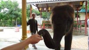 hutsadin-elephant-foundation (1)