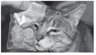 Cat Brings Bag of Cannabis Home New Zealand