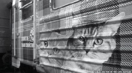 Kitten Train of Friendship: Ukraine
