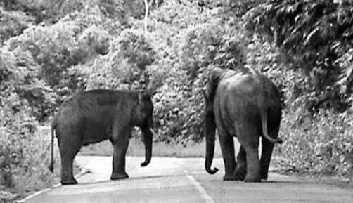 Meeting a Wild Elephant: Keep that Engine On