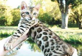 Unusual pets for your family to love...Or not!