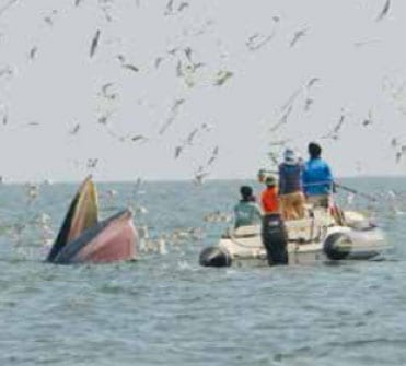 Bryde's whales spotted off Phetchburi coast