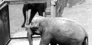 Elephant kidnaps tourists
