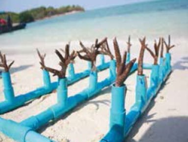 New Artificial Reefs for Cha-Am