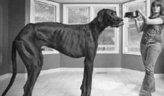 Tallest dog in the world dies