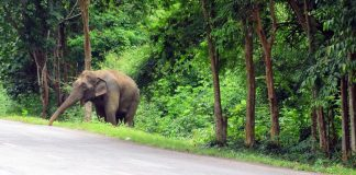 Trunk Detective: Sniffer Elephants Trained To Detect Landmines