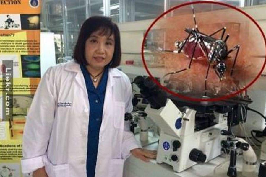 Sterilising Mosquitoes Could Halt Spread of Dengue