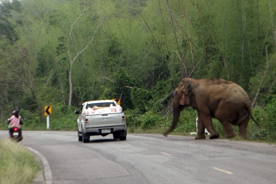 Motorists to Waterfalls in Hua Hin Warned of Encountering Wild Elephants