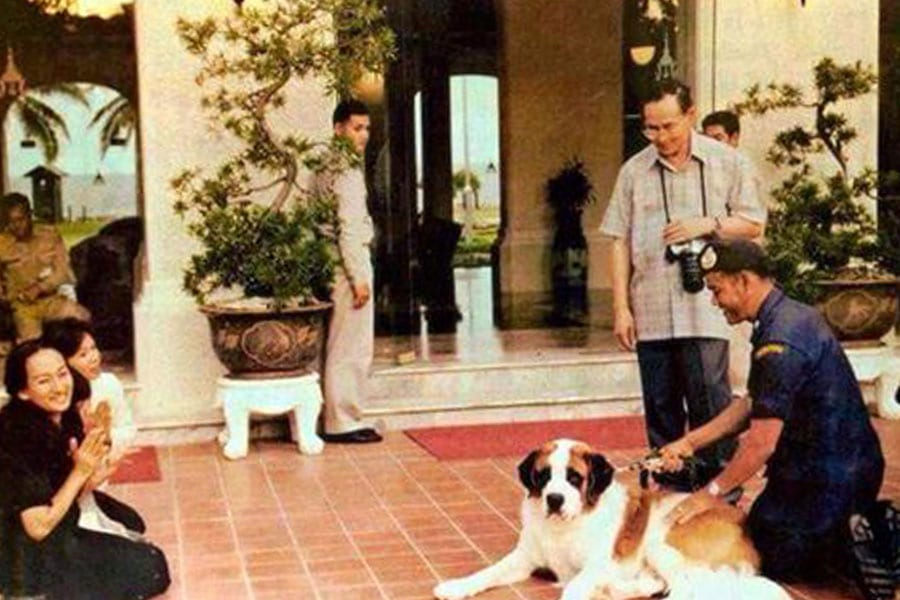 Luang Jaem, One of the Famous Royal Dogs of King Bhumibol