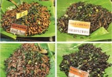 A Bug's Life! Would you try eating Bugs & Insects in Thailand?