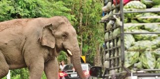 Speaker-equipped Drone Helps Drive away Wild Elephants