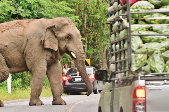 Speaker-equipped Drone Helps Drive away Wild Elephants