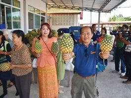 Frustrated Local Farmers Give Away Pineapples to Animals