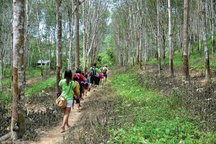 Jungle Aid Foundation for a Brighter Future