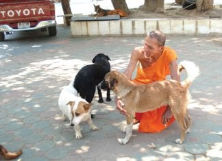 It's Now Illegal to Abandon Animals at Temples