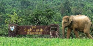 Unesco Visits Kui Buri National Park to Gauge Situation