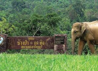 Unesco Visits Kui Buri National Park to Gauge Situation