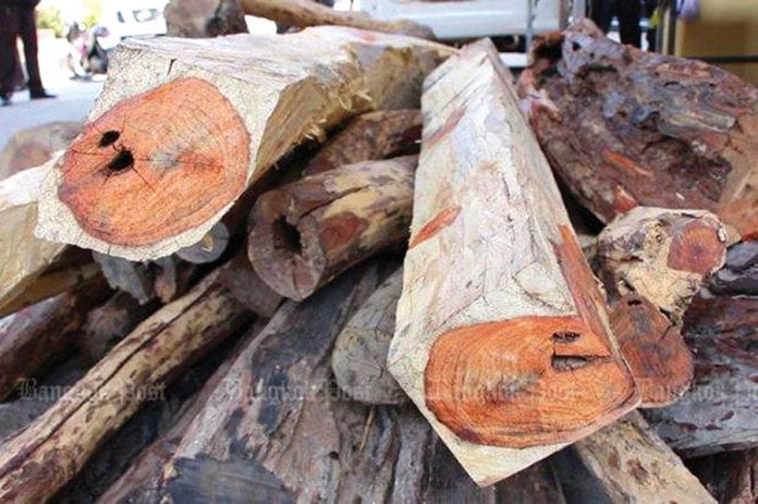 PM Urges Thai Households to Plant Precious Trees