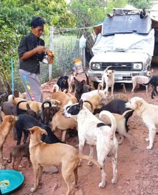 Outcry Forces Retreat on Pet License Fees