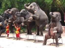 Elephant Tourism: the Fight Against Unethical Operators