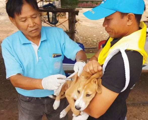 Rabies Vaccination Campaign 2019