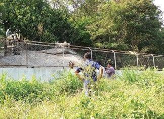 solutions-sought-hua-hin-dog-shelter-sanitation