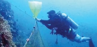 Get rid of the fishing nets on coral reefs
