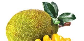 It's not a durian; it's a jackfruit!