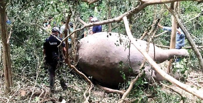 Wild Elephant Found Dead in Kuiburi National Park