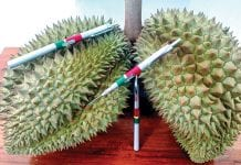 Measuring tool for Durian ripeness