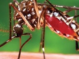 Dengue Fever: Prevention and Control Program