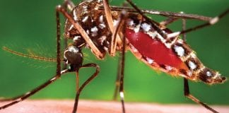 Dengue Fever: Prevention and Control Program
